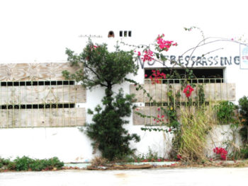 "Parking garage wall with a bougainvillea climbing up it blooming in pink. A line of graffiti reads ""No Tressrassing."""