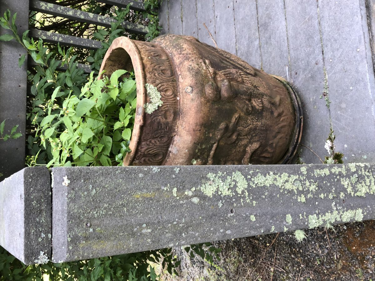 Large clay jar with plant growing out of it. Copyright 2019 Andrea LeDew