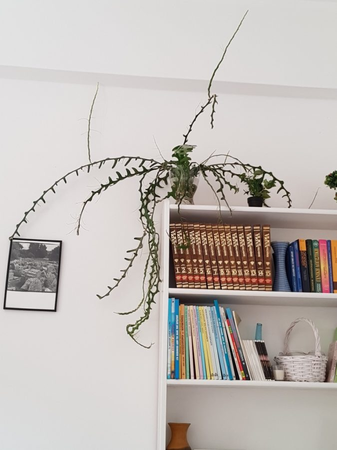 White bookcase with a plant on top, which resembles a dragon with its wings outspread. PHOTO PROMPT © Penny Gadd