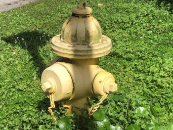 Fire hydrant in the midst of overgrown weeds. Copyright 2019 Andrea LeDew