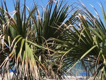 Palm fronds blocking the view of a Florida beach against a brilliant blue sky. Copyright 2020 Andrea LeDew