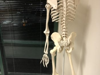 A headless skeleton on a stand before a classroom window, darkened by night.