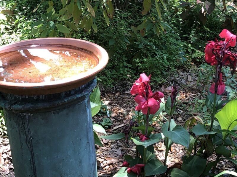A birdbath atop a blue column by a pink gladiolis in a garden. Copyright Andrea LeDew.
