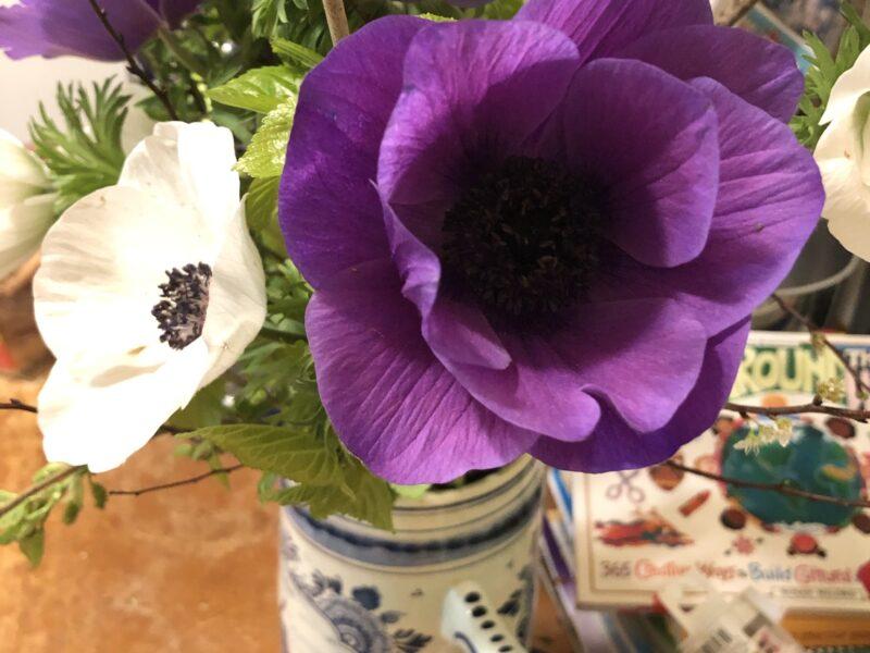 Purple and white anemones in a blue and white vase on a table. Copyright Andrea LeDew.