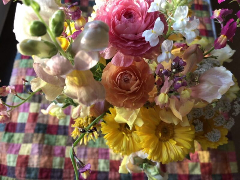 A colorful posy bouquet by Mattie LeDew against a blurry multi-colored checkered placemat. Copyright Andrea LeDew.