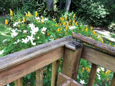 The railing on a back porch deck, splitting away from the bannister, revealing the jagged nails beneath, in front of a bed of flowers. Copyright Andrea LeDew.