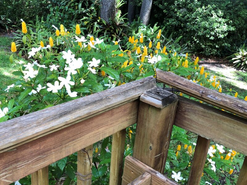 The banister on a back porch deck, splitting upwards, away from the railing, revealing the jagged nails beneath, in front of a bed of flowers. Copyright Andrea LeDew.