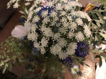 An umbel or umbrella-shaped inflourescence of tiny white flowers. A globular inflourescence, like some hydrangeas, could be called a glome. Apparently globes are gloomier. By Andrea LeDew.