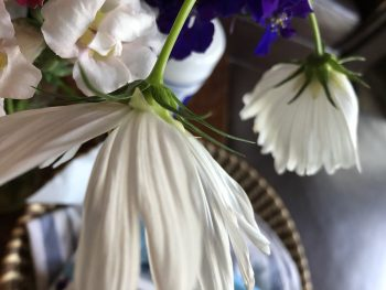 The whitest part of a bouquet with only the slightest bit of purple creeping in. Copyright Andrea LeDew,