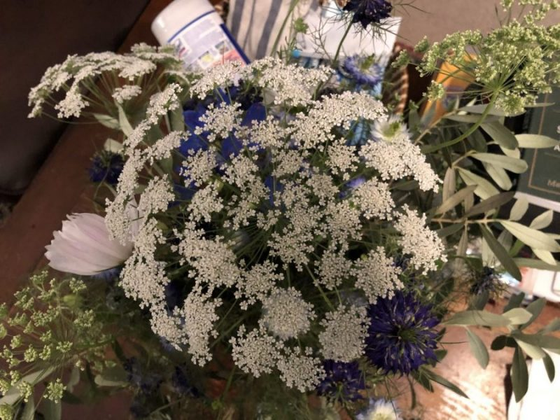 A white bouquet blooming joyously, as a container of wipes lurks in the background. Copyright Andrea LeDew.