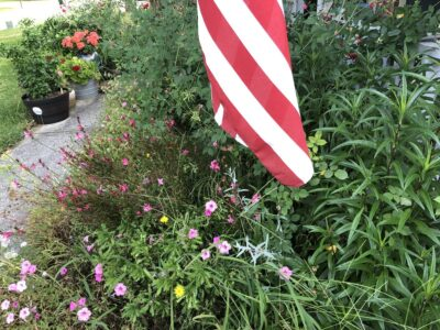 The red and white stripes of the lower half of an American flag hanging over a rather overgrown flowerbed. Copyright Andrea LeDew.