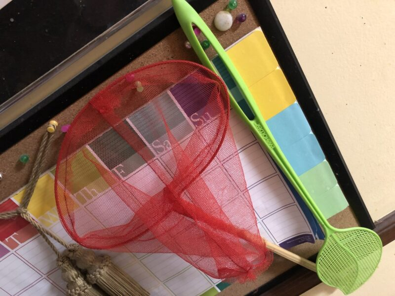A fly swatter and a butterfly net hung up on a corkboard. Copyright Andrea LeDew.